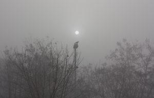 Crow sunrise